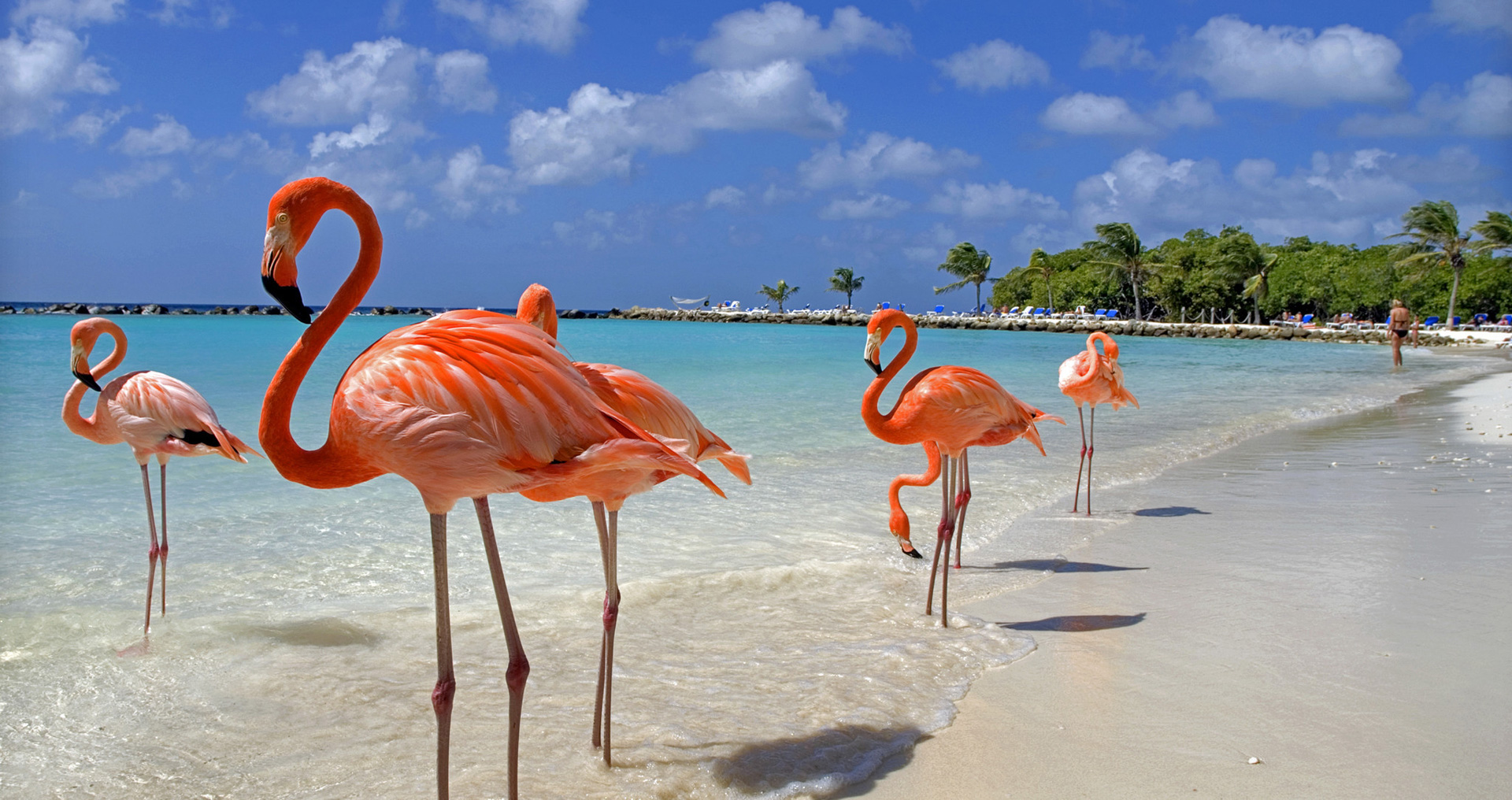 Private Jet Charter to Aruba